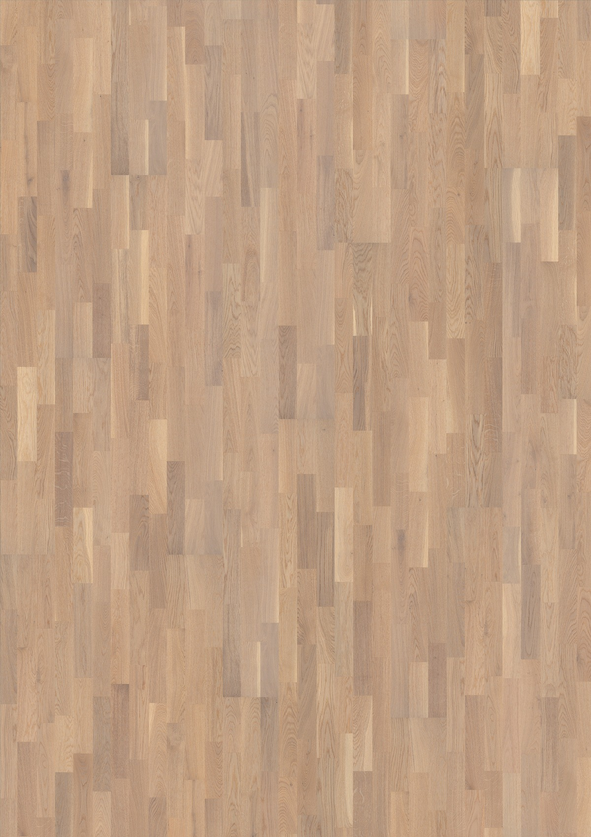 Oak Abetone